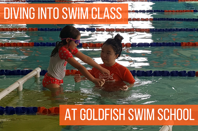 goldfish-swim-school